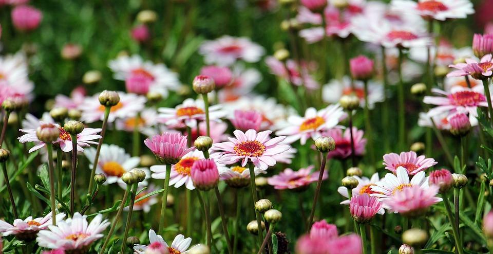 Quels sont les différents types de fleurs ?